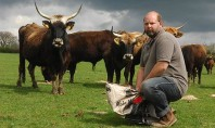 Nazi Cows, Unkosher Beef
