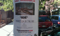 A Frenchy Crocodile Lost In Nolita