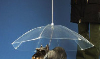 Dogbrella Keeps Your Pup Dry