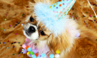 Dogs In Party Hats (For A Good Cause)