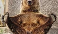 The Real Yogi Bear
