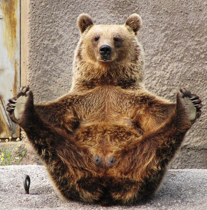 bear-yoga-12.jpg