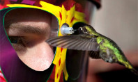 Up Close & Personal Hummingbird Feedings