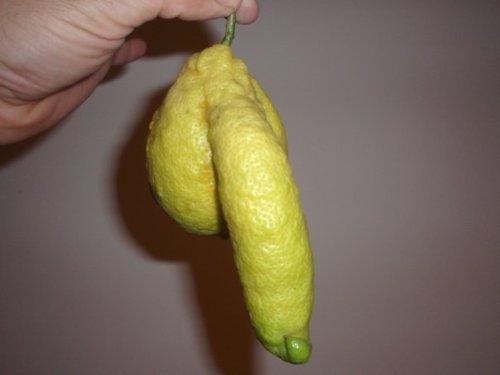 http://www.theluxuryspot.com/wp-content/uploads/2011/01/lemon_cock.jpg