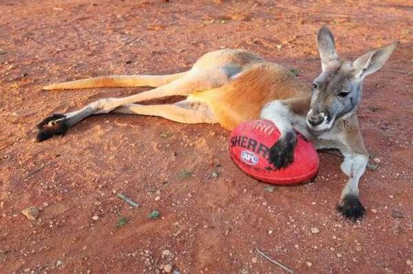 if i ever adopt a kangaroo