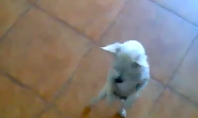 Salsa Dancing Chihuahua to Start Your Weekend Off Right