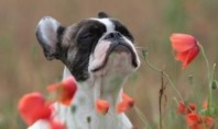 Cute Spotting: Stop to smell the flowers
