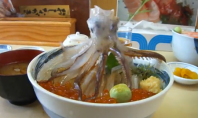 Scariest Japanese Lunch Option Ever