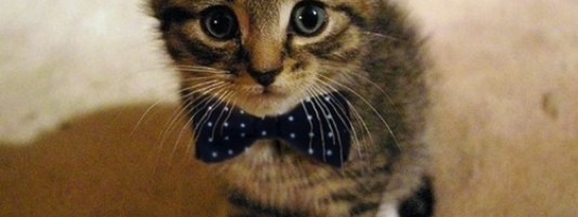 Cute Spotting: Bowtie Cat