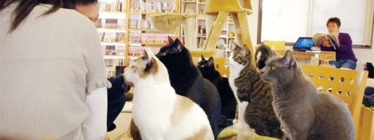 Travel Spotting: Kitty Cafes in Japan