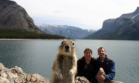 Internet Spotting: The Best Animal Photobombs Of All Time