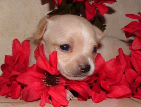 puppy-flowers