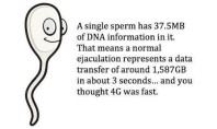 Top Five Facts About Sperm