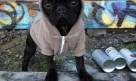 pug life puppies hoodies cute animals