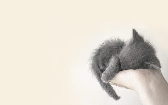 Tiny tired kitten cute animals