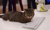 bub cat typing