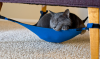 A Hammock For Your Lazy Cat To Lounge In