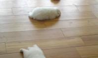puppies on the floor
