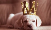 Princess Puppy