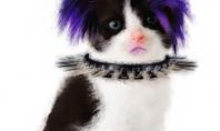 Met Gala 2013 punk kitten