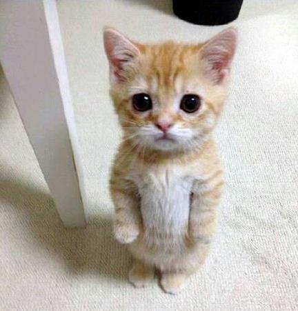 Sad Kitten Eyes
