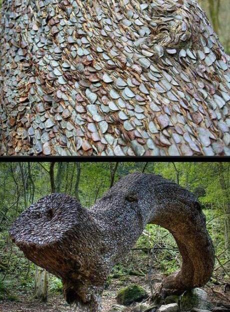 coin wishing tree