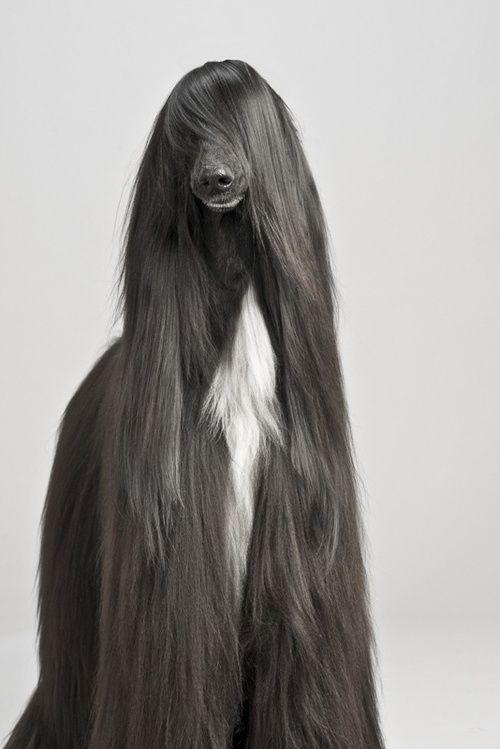 Glam Dog