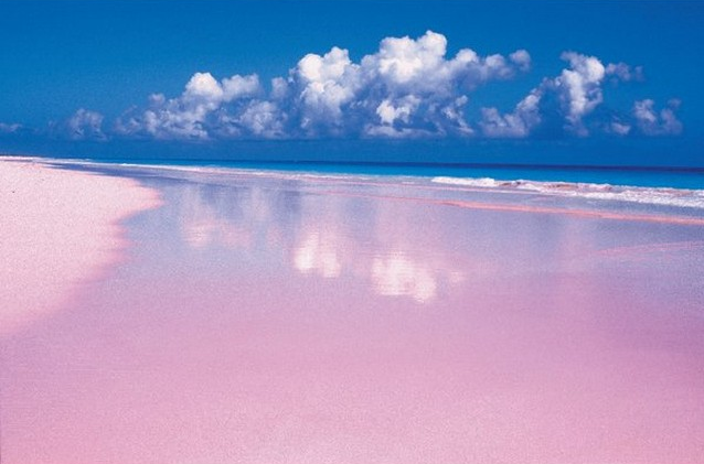 All the pink beach goodness for Pink sand beaches in the bahamas