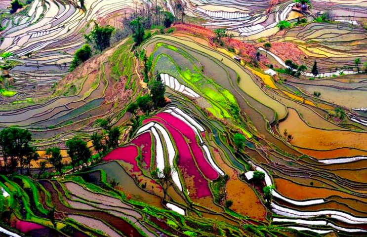 yuanyang rice fields, china