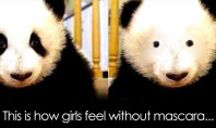 face without makeup panda bear