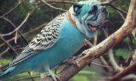 dogbirds