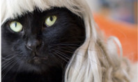 Cats Wearting Wigs: YASSSS