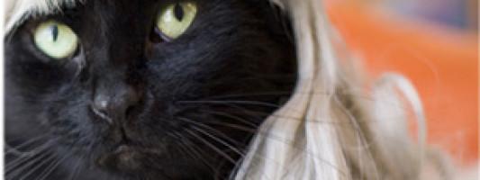 Cats Wearting Wigs: YASSSS