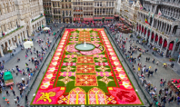 flower carpet, brussels