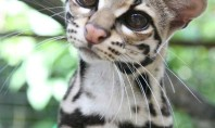 The Cutest Rainforest Cat