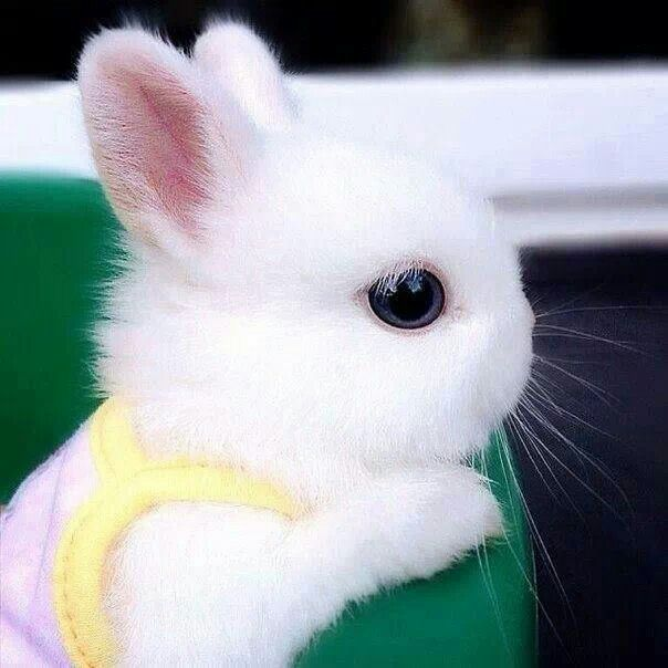 The Luxury Spot » ENTERTAINMENT Cute Baby Bunnies