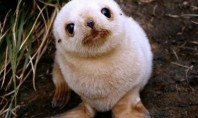 Top 5 Cute Baby Seals on the Internet