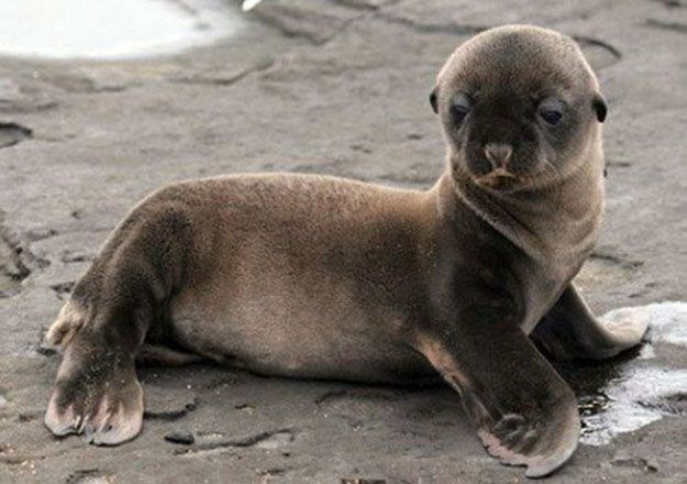The Luxury Spot » ENTERTAINMENT Cute Baby Seals
