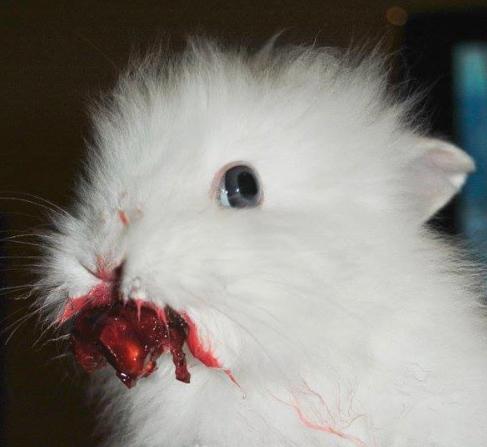 bunnies eating cherries
