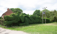 hedge dragon