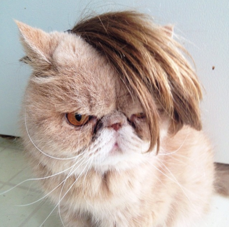 cats with bangs