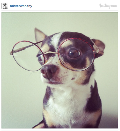 dogs with eyeglasses