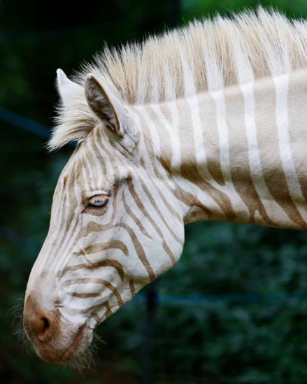 albino animals