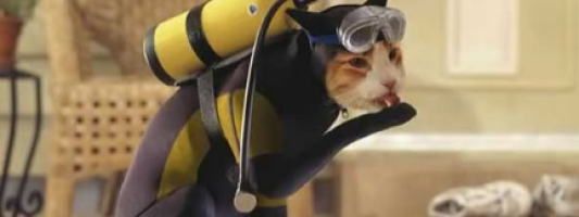 ridiculous cat costumes