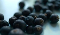 Health Benefits of Juniper Berries