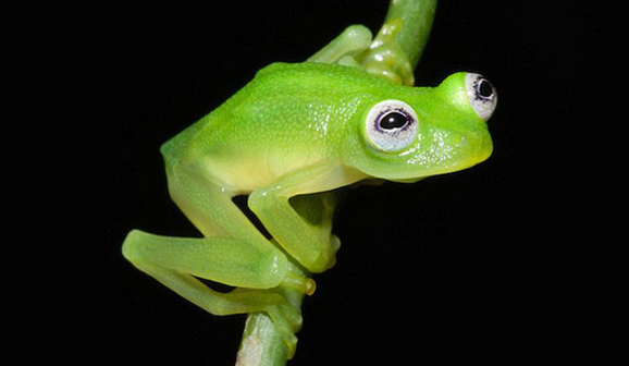 real life kermit the frog