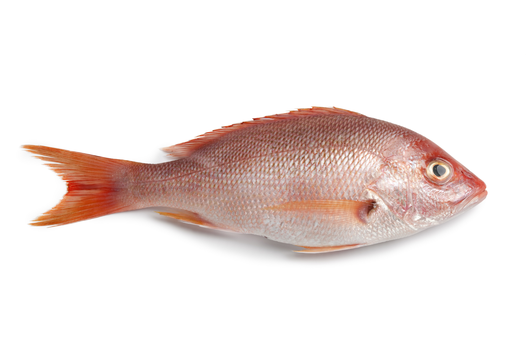 Healthy kosher fish options the luxury spot for Red snapper fish