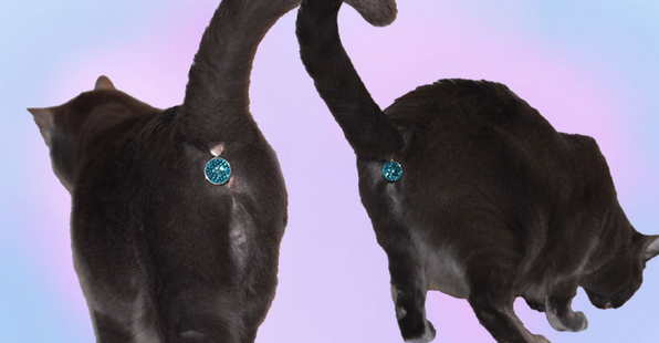 cat butthole jewels