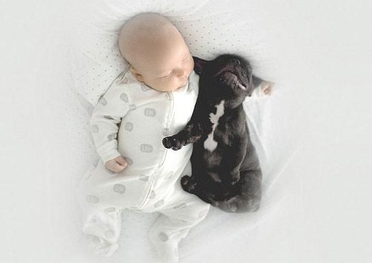 baby bulldog best friends