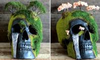 bonsai skulls